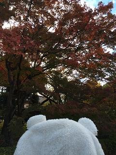 写真 2014-11-19 13 37 06.jpg